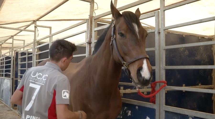La preparación del caballo antes de un partido de horseball